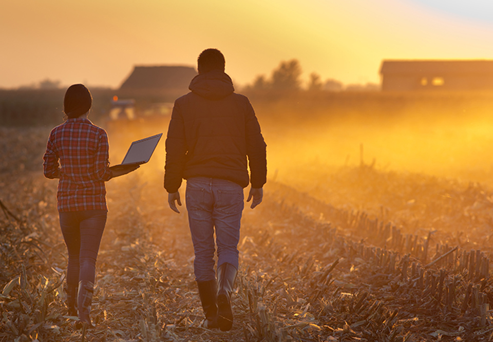 Man and woman in casual clothes walking in a cornfield at sunset. The woman is holding a laptop.