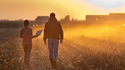 Man and woman walking in a cornfield holding a laptop